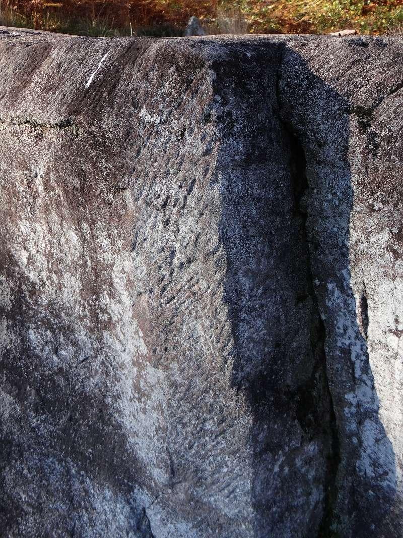 Sortie champignons sur le site gallo-romain de la Croix Guillaume (Saint-Quirin - Moselle) Dsc07715