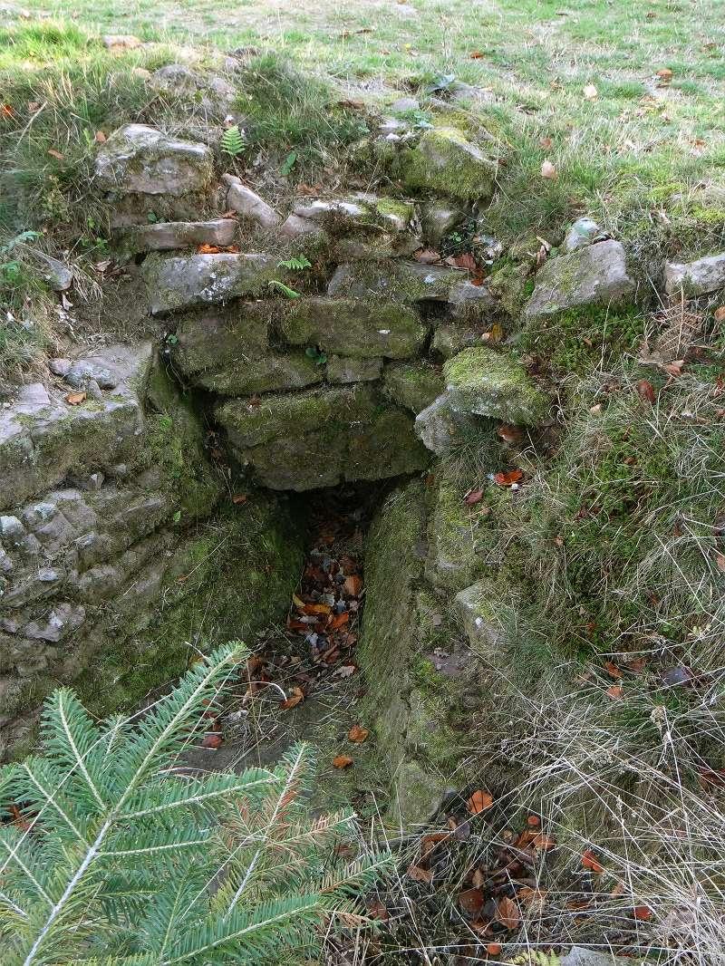 Sortie champignons sur le site gallo-romain de la Croix Guillaume (Saint-Quirin - Moselle) Dsc07717