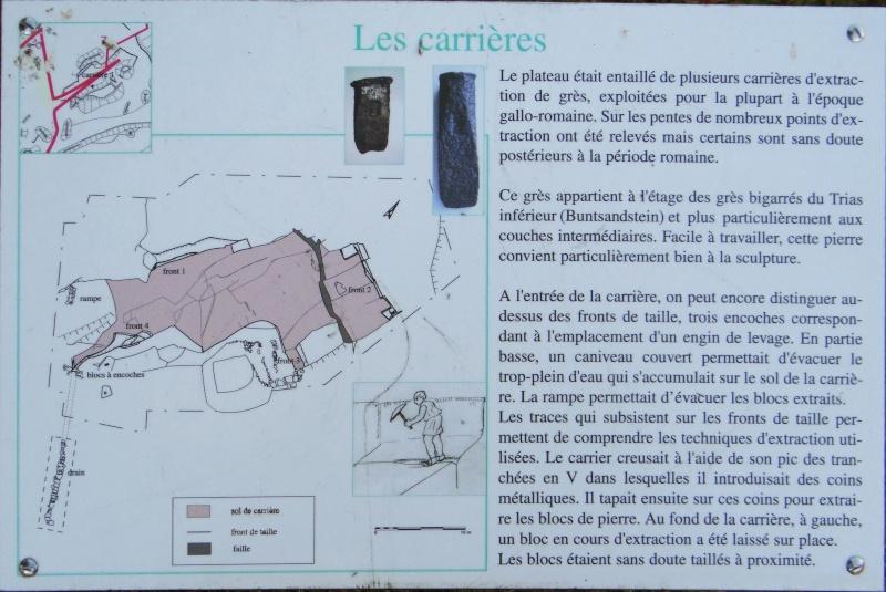 Sortie champignons sur le site gallo-romain de la Croix Guillaume (Saint-Quirin - Moselle) Dsc07718