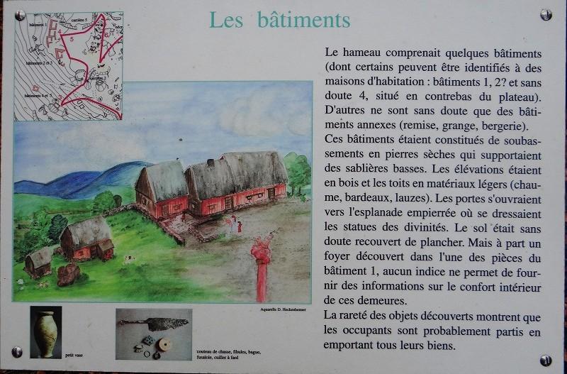 Sortie champignons sur le site gallo-romain de la Croix Guillaume (Saint-Quirin - Moselle) Dsc07911