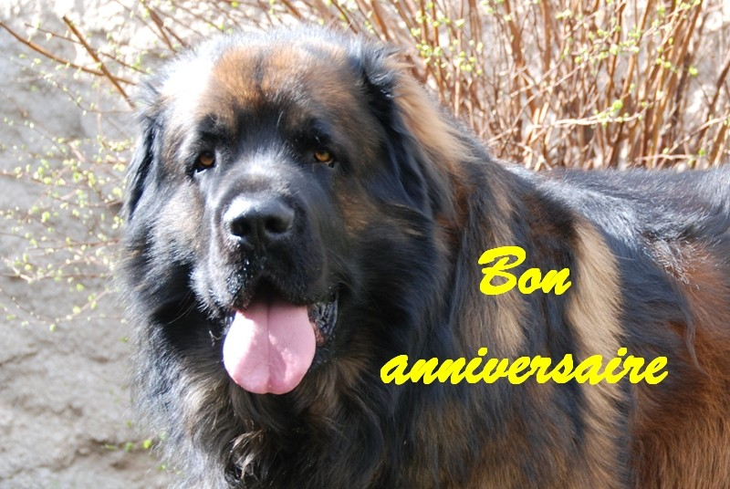 Il y a un autre z anniversaire ce jour  - Page 2 Bon_an10