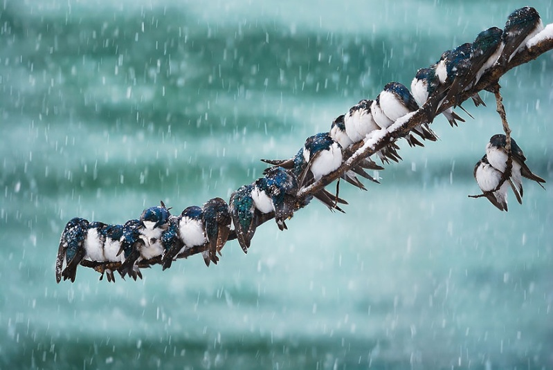 un peu de tendresse dans ce monde de brute ... Birds-10