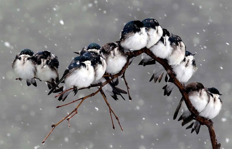 un peu de tendresse dans ce monde de brute ... Birds-11