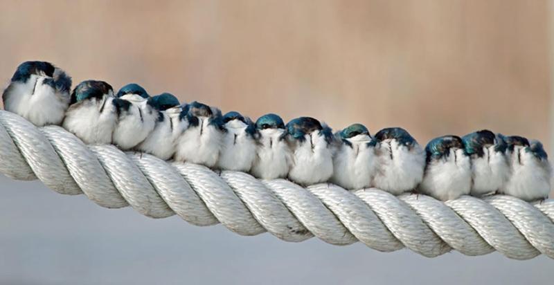 un peu de tendresse dans ce monde de brute ... Birds-12
