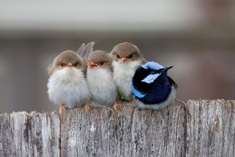 un peu de tendresse dans ce monde de brute ... Birds-13