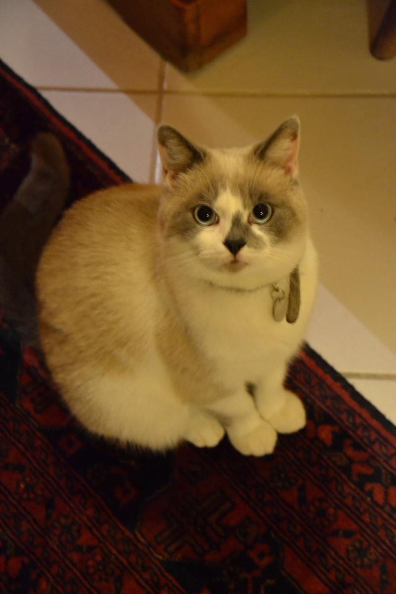 Mika le petit chouchou de Patou 12068910