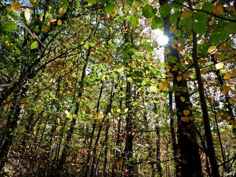 L'automne et ce qui l'entoure part1 P1020615