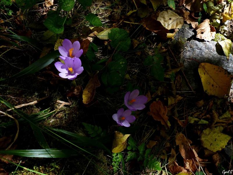 L'automne et ce qui l'entoure part1 P1020616