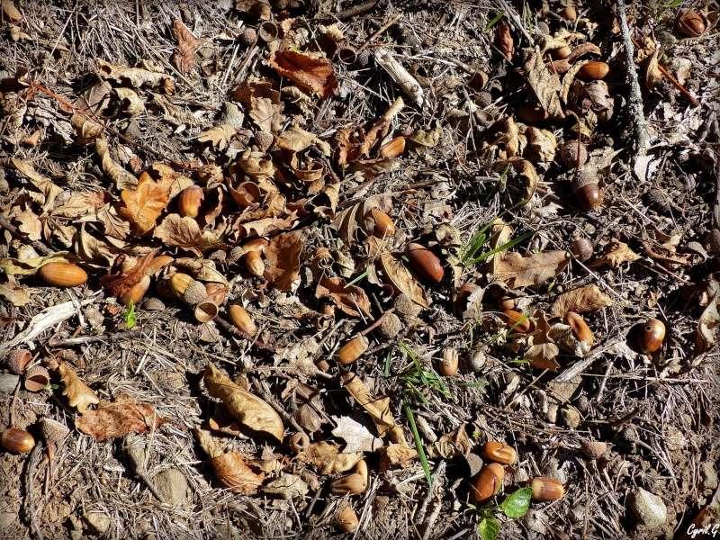 L'automne et ce qui l'entoure part1 P1030012