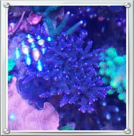vos plus vieux coraux 2015-111