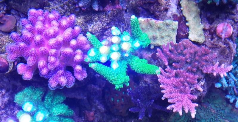 vos plus vieux coraux 20151011