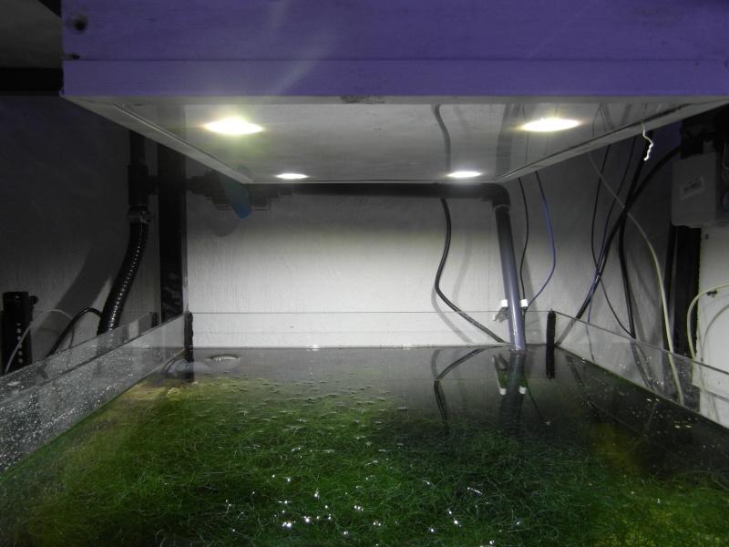 """Mon bac 630 litres + refuge """"laurent2962"""" - Page 2 Sam_3713"""