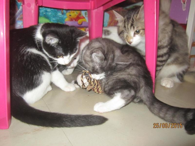 Lastar - Noir et blanc - Né en Juillet 2015 Img_5312