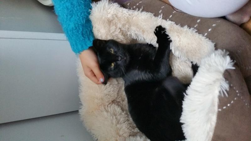Lady, femelle type européen noire née le 1er mai 2015 20151016
