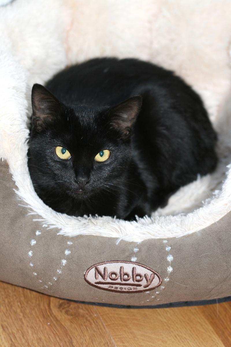 Lady, femelle type européen noire née le 1er mai 2015 Lady111