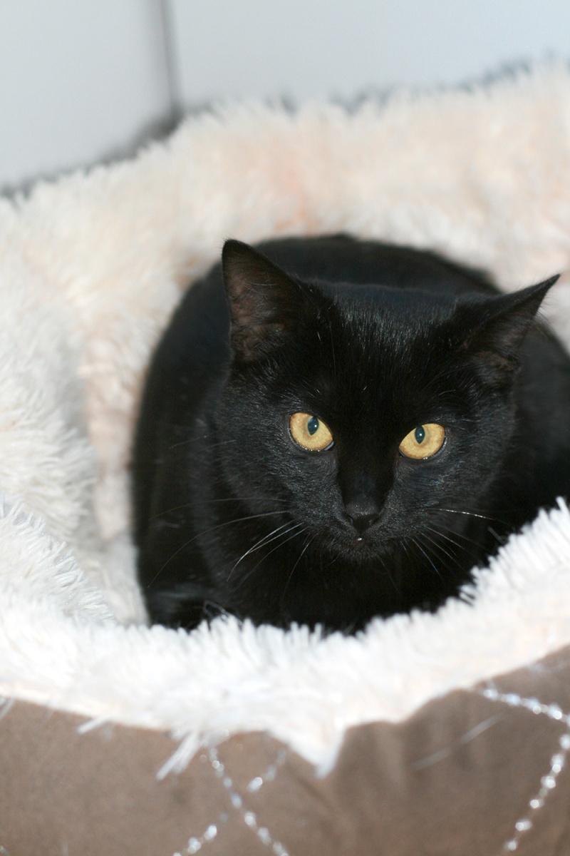 Lady, femelle type européen noire née le 1er mai 2015 Lady610