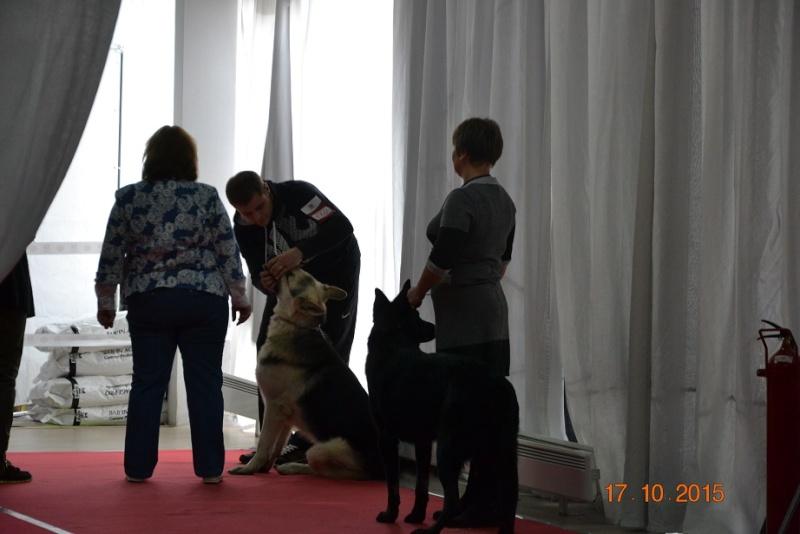 "17.10.2015 CACIB ""КУБОК БОБА БРЭМПТОНА 2015""CAC-VIP DOG Dsc_0712"