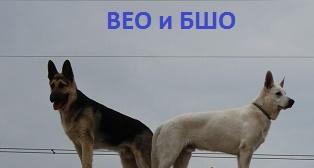 ВОСТОЧНО-ЕВРОПЕЙСКАЯ ОВЧАРКА VEOLAR LUVR Img_7213