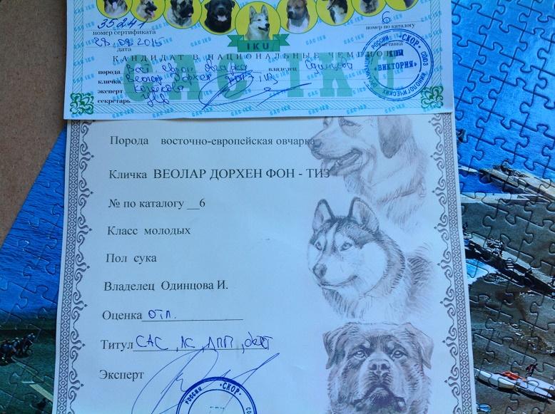 ВОСТОЧНО-ЕВРОПЕЙСКАЯ ОВЧАРКА ВЕОЛАР ДОРХЕН ФОН ТИЗ (Дора) Oaia_410