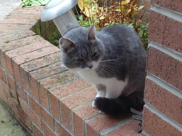 Chat trouvé à Villereau Dscn3715