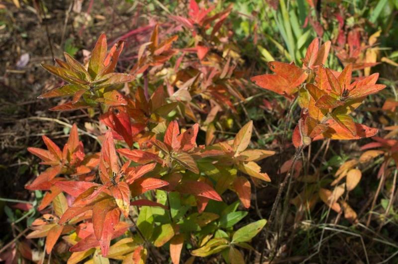 l'automne et ses couleurs Anapha13