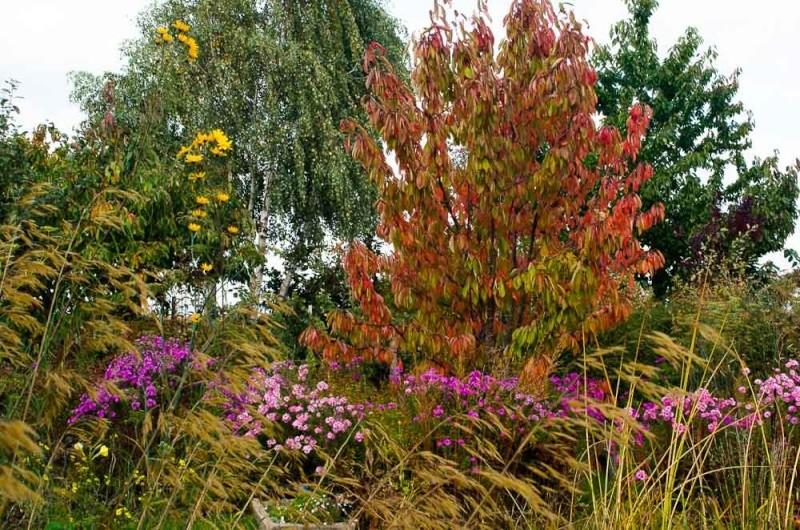 l'automne et ses couleurs Anapha14