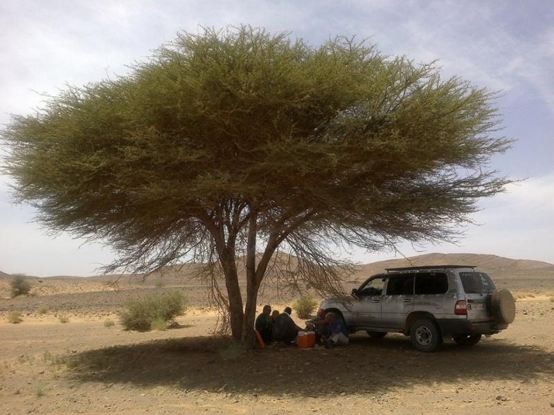 Bladi le musée Arabo Berbere Ouarza10