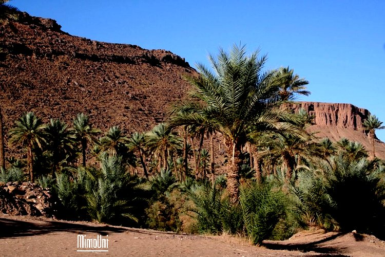 tazarine ! on a tenté de vous la cacher, elle n'a plus de secret ce paradis Amazigh Tazari14