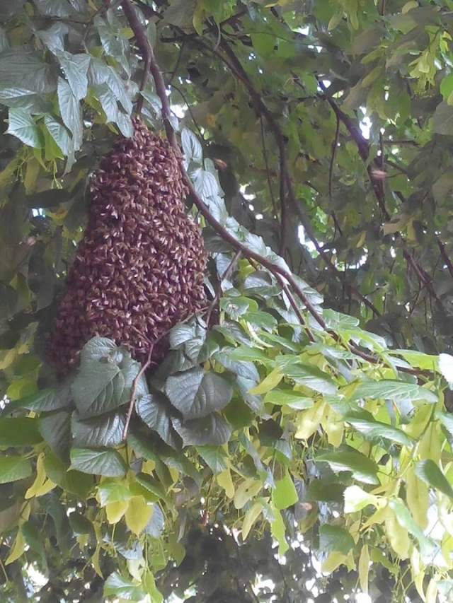 Chronique de mes abeilles 10474610