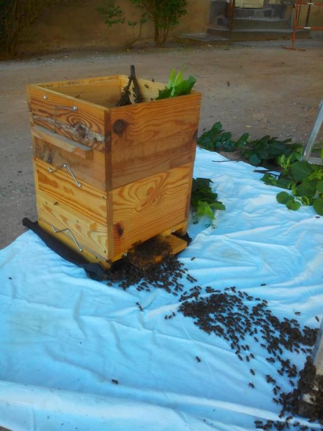Chronique de mes abeilles 11264810