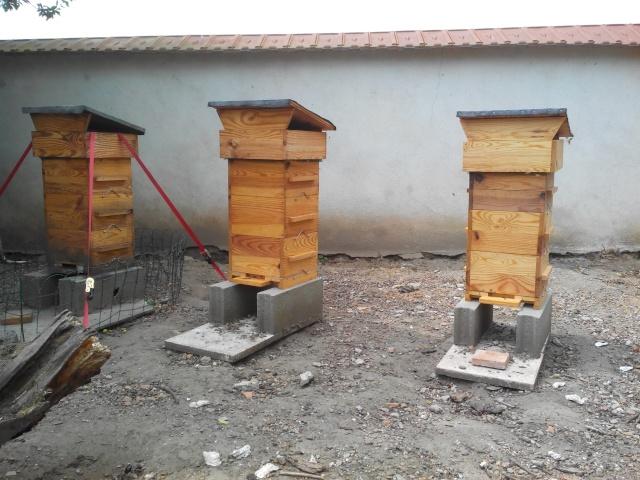 Chronique de mes abeilles Img_2011