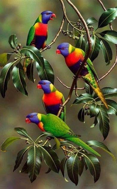 Des oiseaux et de la couleur 12118610