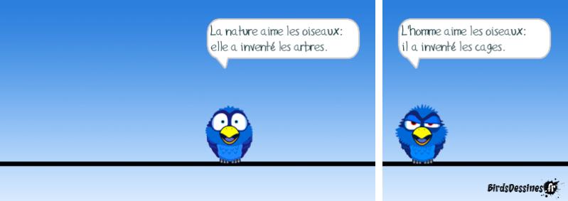 Les Birds - Page 13 14413710
