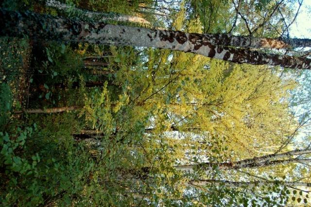 Ambiance automne 2015 - Page 2 Dsc_0011