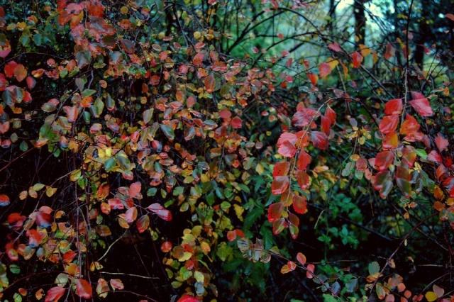 Ambiance automne 2015 - Page 7 Spirae10
