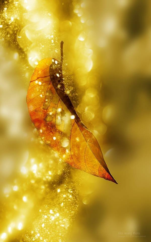 Les feuilles d'automne - Page 2 12191012