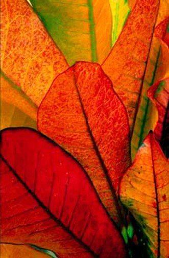 Les feuilles d'automne - Page 2 12208413