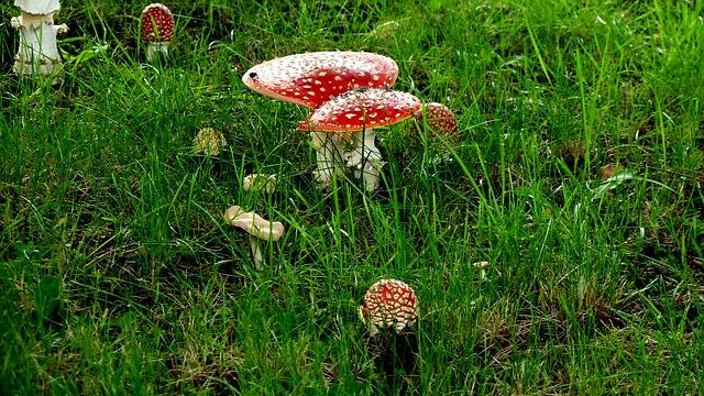 Les champignons 3a10310