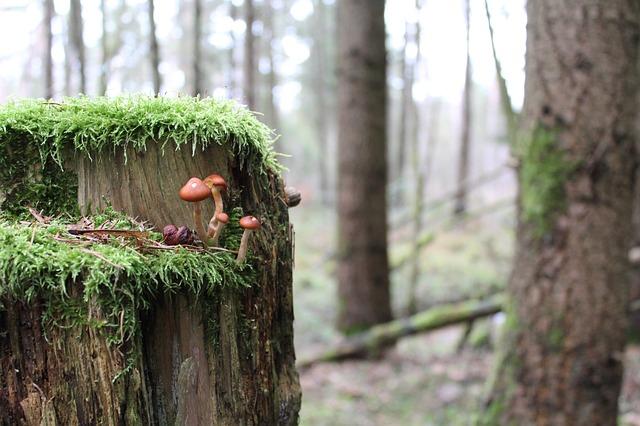 Les champignons  - Page 6 3a11310