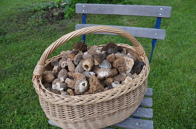 Les champignons 3a12210