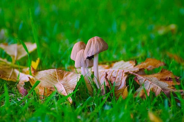 Les champignons  - Page 6 3a13010