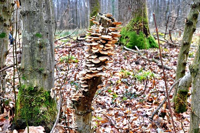 Les champignons  - Page 7 3a14810