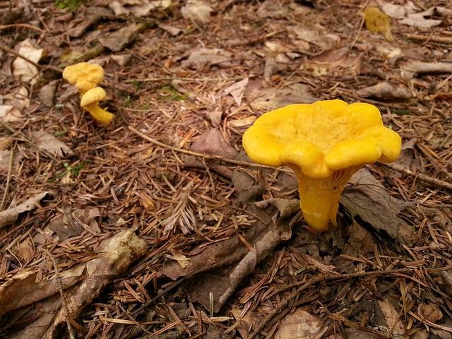 Les champignons  - Page 4 3a2310