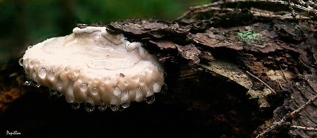 Les champignons  - Page 4 3a3010