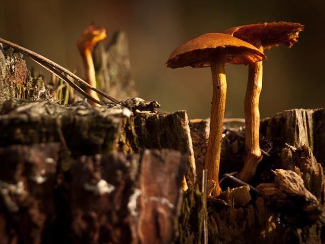 Les champignons  - Page 4 3a3110