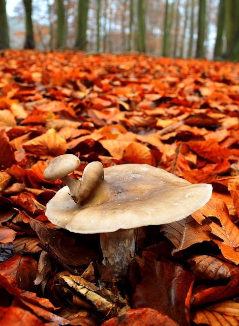 Les champignons  - Page 4 3a3610