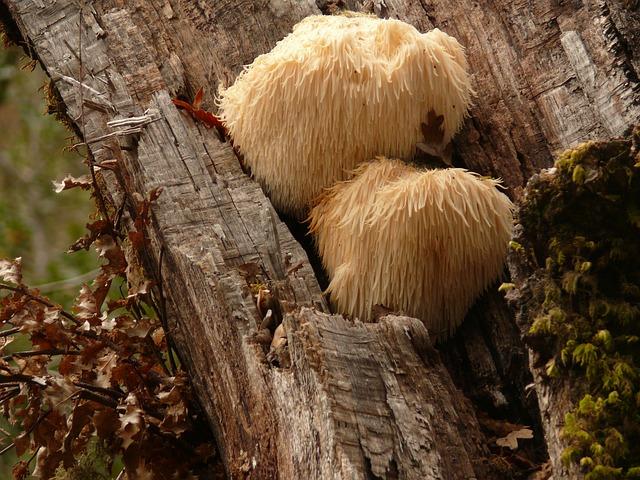 Les champignons 3a5110