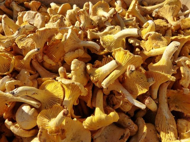 Les champignons 3a5210
