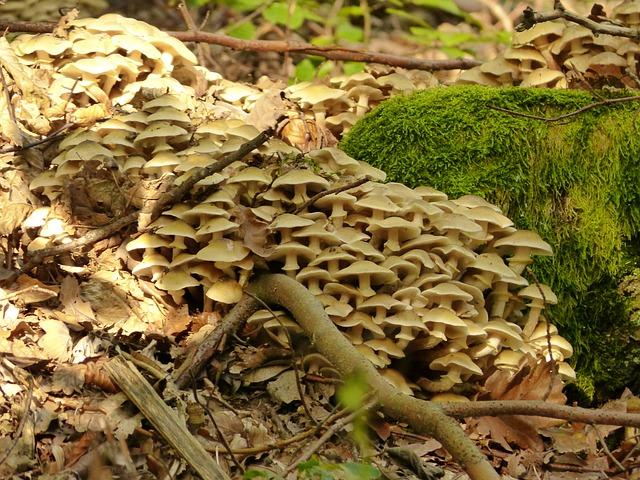 Les champignons  - Page 4 3a5310