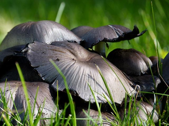 Les champignons 3a7310